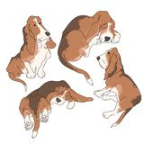Vector illustration funny dog thoroughbred on a white background. Drawing of Basset Hound Royalty Free Stock Images