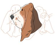 Vector illustration funny dog thoroughbred on a white background. Drawing of Basset Hound Royalty Free Stock Photos