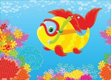 Fish-diver on a reef. Vector illustration of a funny fish with a mask and a snorkel swimming in blue water over colorful corals in a tropical sea Royalty Free Stock Images