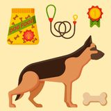 Vector illustration funny thoroughbred german shepherd dog attentive happy pet pedigree canine accessory. Vector illustration funny thoroughbred german shepherd Stock Photos