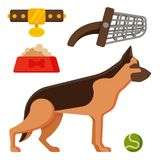 Vector illustration funny thoroughbred german shepherd dog attentive happy pet pedigree canine accessory. Vector illustration funny thoroughbred german shepherd Stock Image