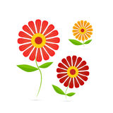 Vector Illustration of Gerbera Flowers Stock Photography