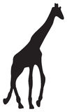 Vector illustration of giraffe Stock Photos