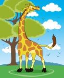 Vector illustration. Giraffe. Stock Photos