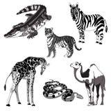 Vector illustration giraffe, zebra, crocodile, camel, snake and tiger. black and white and gray. stock illustration