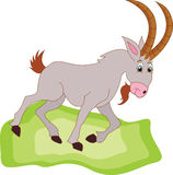 Vector illustration of Goat Cartoon. Goat carton giving thumb up Stock Images