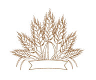 Vector illustration of gold ripe wheat ears. Icon, Logo or design element Stock Photo