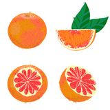 Vector illustration of grapefruit fruits Royalty Free Stock Photography