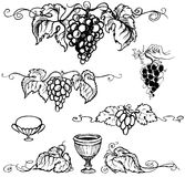 Vector illustration grapes Stock Image