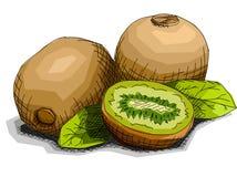 Vector illustration of drawing fruit kiwi. Stock Image