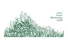 Vector illustration of grass and twigs of plants. Stock Image