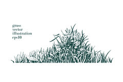 Vector illustration of grass and twigs of plants. Royalty Free Stock Images