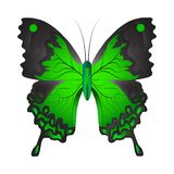 Vector illustration of a green butterfly stock illustration