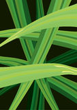 Vector Illustration of Green Curves Stock Image