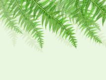 Background with green fern leaves. Vector illustration of green fern leaves background Royalty Free Stock Images