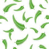 Green fern leaves seamless pattern. Royalty Free Stock Images