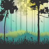 Vector illustration of green forest Stock Photo