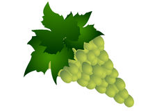 Vector illustration. Green grape isolated on a white background Stock Images