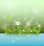 Vector illustration Green grass and leaves with white daisy, wildflower and shadow reflection on light blue water Stock Images