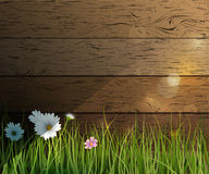 Vector illustration Green grass and Wildflowers Stock Photo