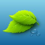 Vector illustration of green leaves and dew drops Stock Images