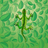 Vector illustration of green lizard among foliage Stock Images