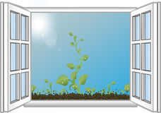 Vector illustration green sprouts  an open window Royalty Free Stock Photography