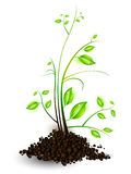 Vector Illustration Of The Growth Of A Young Plant Royalty Free Stock Photos
