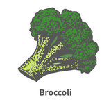 Vector illustration hand-drawn green broccoli tops Royalty Free Stock Image
