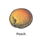 Vector illustration hand-drawn juicy ripe peach Royalty Free Stock Photos
