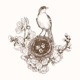 Vector illustration of hand drawn nest with spotted eggs and bird on blooming brunch. Graphic style, beautiful. Bird nest. Robin nest, eggs and feathers. Hand stock illustration