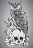 Vector illustration with hand drawn ornate owl on human skull Royalty Free Stock Photos