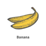 Vector illustration hand-drawn ripe yellow banana Royalty Free Stock Image
