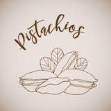 Vector illustration hand drawn sketch pistachios Stock Photo