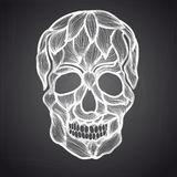 Vector illustration with Hand Drawn Skull Royalty Free Stock Images