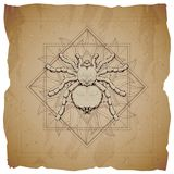 Vector illustration with hand drawn Spider and Sacred geometric symbol on old paper background with torn edges. Abstract mystic. Sign. Sepia linear shape. For stock illustration
