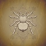 Vector illustration with hand drawn Spider and Sacred geometric symbol on vintage paper background. Abstract mystic sign. Sepia linear shape. For you design royalty free illustration