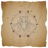 Vector illustration with hand drawn Wasp and Sacred geometric symbol on old paper background with torn edges. Abstract mystic sign. Sepia linear shape. For you vector illustration