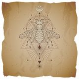 Vector illustration with hand drawn wasp and Sacred geometric symbol on vintage paper background with torn edges. Abstract mystic stock illustration