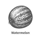 Vector illustration hand-drawn watermelon Royalty Free Stock Photography
