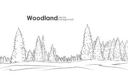Vector illustration: Hand drawn Woodland landscape. Sketch with pine forest. Vector illustration: Hand drawn Woodland landscape. Sketch with pine forest Stock Images