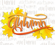 Vector illustration of hand lettering word - autumn - with realistic yellow autumn leaves on typography backdrop, filled Stock Photos