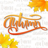 Vector illustration of hand lettering word - autumn - with realistic yellow autumn leaves on typography backdrop, filled. With word autumn Vector Illustration