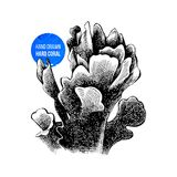 Lettuce coral isolated. Vector illustration of hand sketched lettuce coral Stock Images