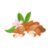 Vector illustration of a handful  Almonds. Stock Photography