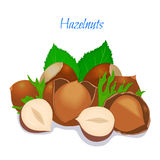 Vector illustration of a handful Hazelnut. Vector illustration of a handful of filbert. Hazelnut in a shell, shelled half, crushed walnut leaves. Appetizing Royalty Free Stock Photography