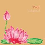Vector illustration handmade drawing pastel chalks lotus flower Stock Photos