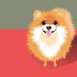 Vector Illustration of a happy fluffy Pomeranian dog Stock Photos