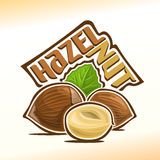 Vector illustration of hazelnut Stock Photos