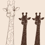 Vector illustration head of a giraffe. Isolated objects on white. EPS10 Stock Photos